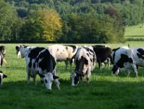 p & K for grassland