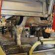 robotic milking