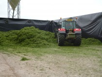 silaging BF 2013 2